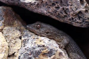 Spännande reptil