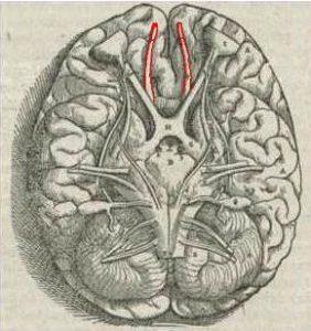 Luktsinnets koppling till amygdalan