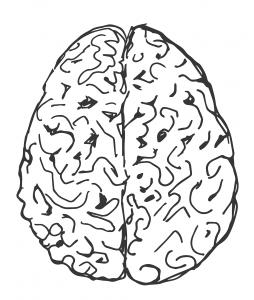 träna hjärnan havlorna