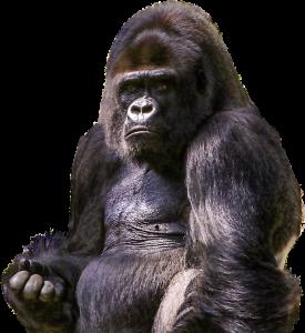 Gorilla som symboliserar Primathjärnan